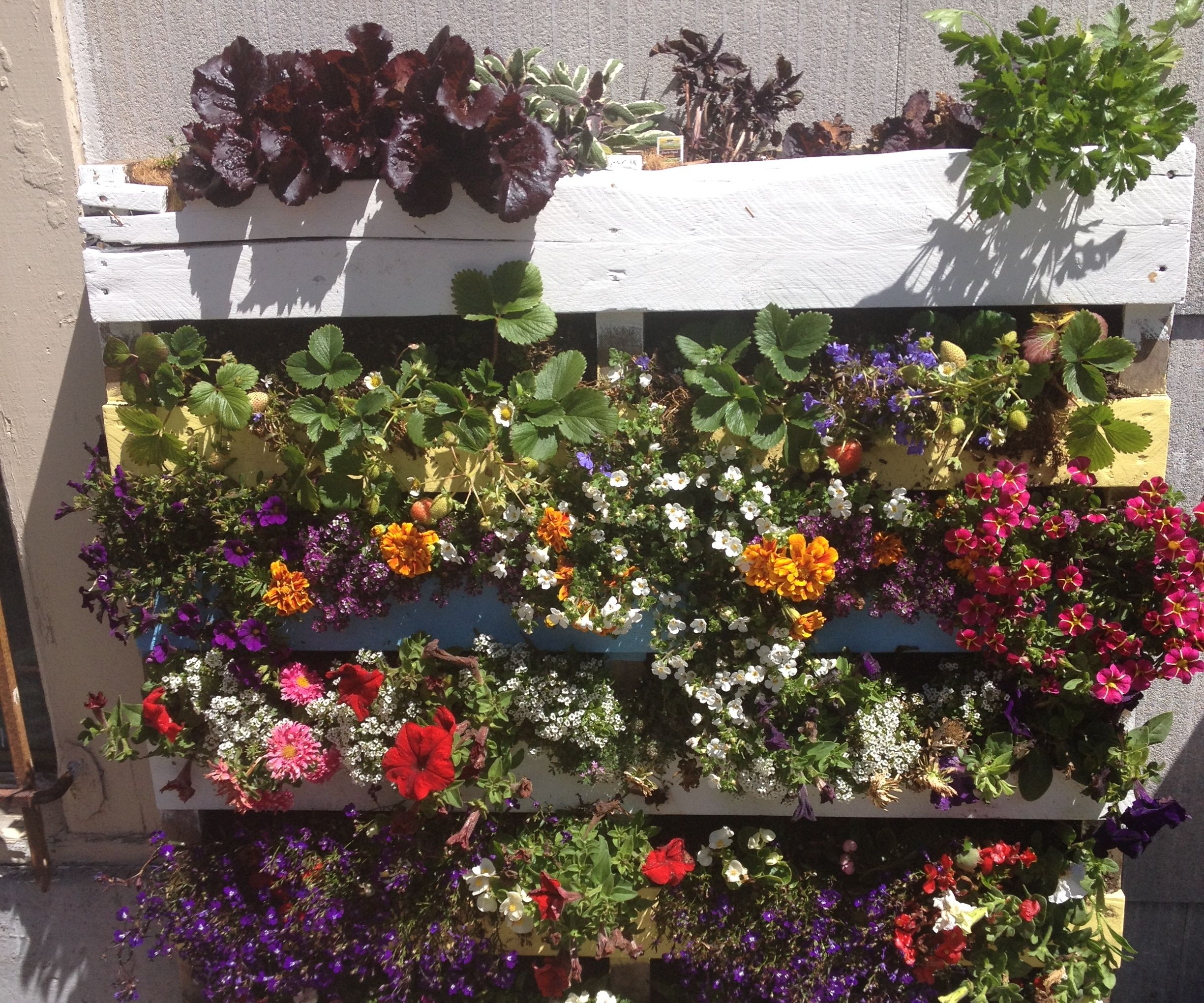 Make Your Own Pallet Garden