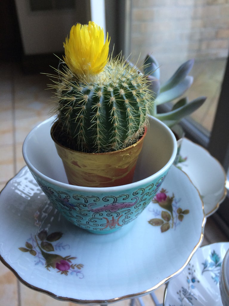 Transfer Plants to Tea Cups