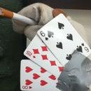 Poker Puppet
