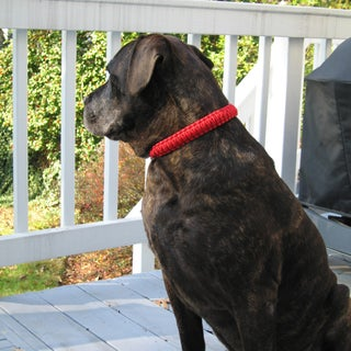 Survival Dog Collar 005.jpg