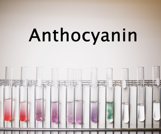 Extracting Anthocyanin: a Natural PH Indicator