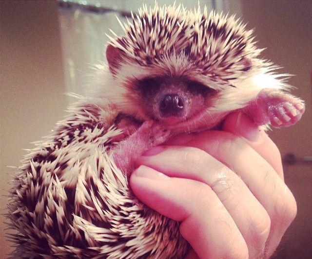 Hedgehog Mani-Pedis