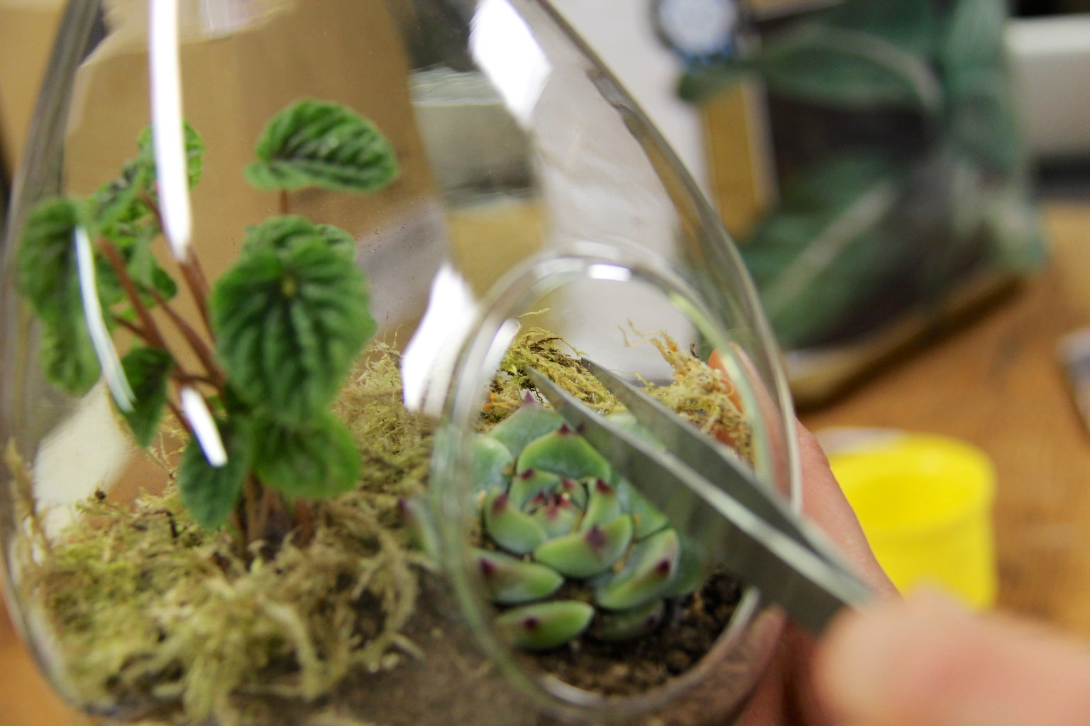 How to Add Small Features to a Terrarium