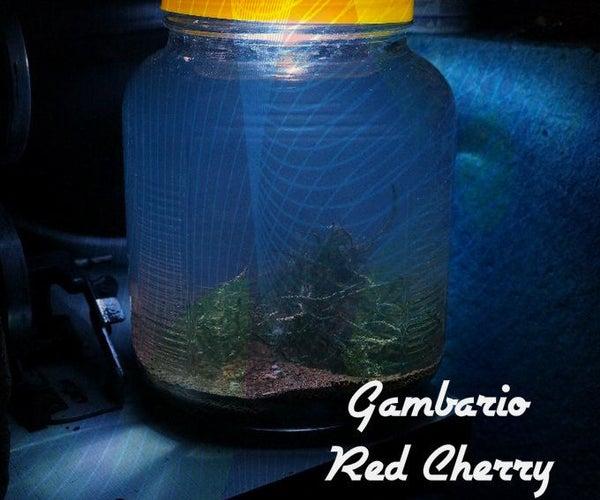 Gambario of Cherry Red (usb) - Acuario Para Camarones Con Luz USB
