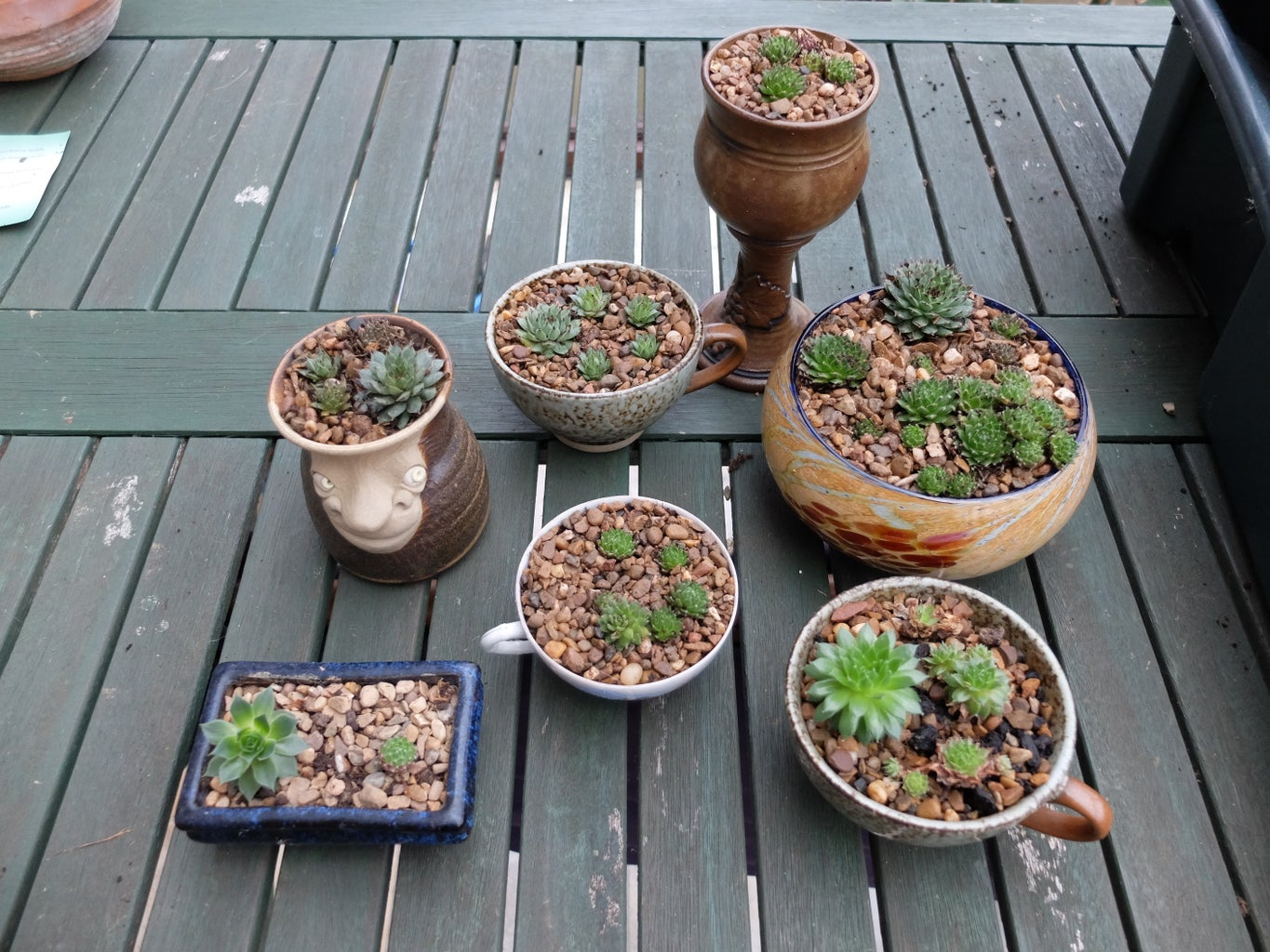 Simple and Unusual Planted Pots for Indoors