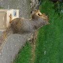 Bird proof - Squirrel Feeder