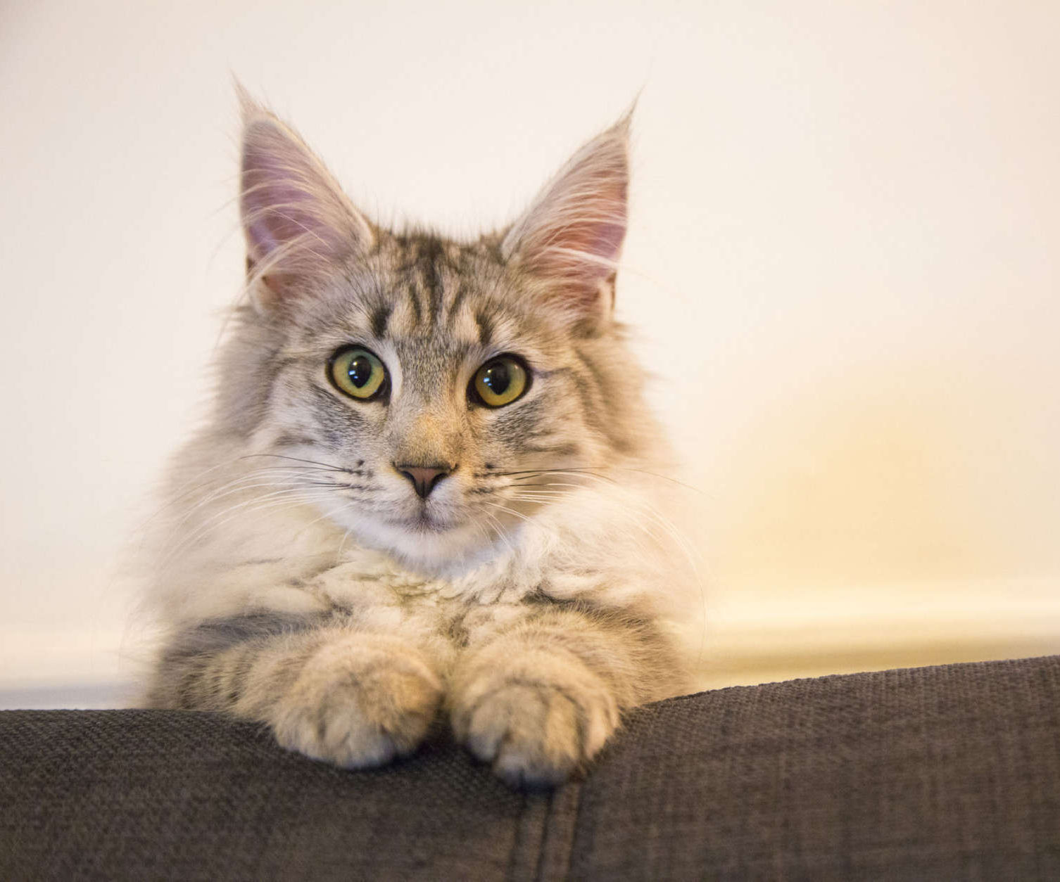 Cat Fixer Instructable