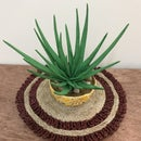 Paper Quilling Aloe Vera Plant