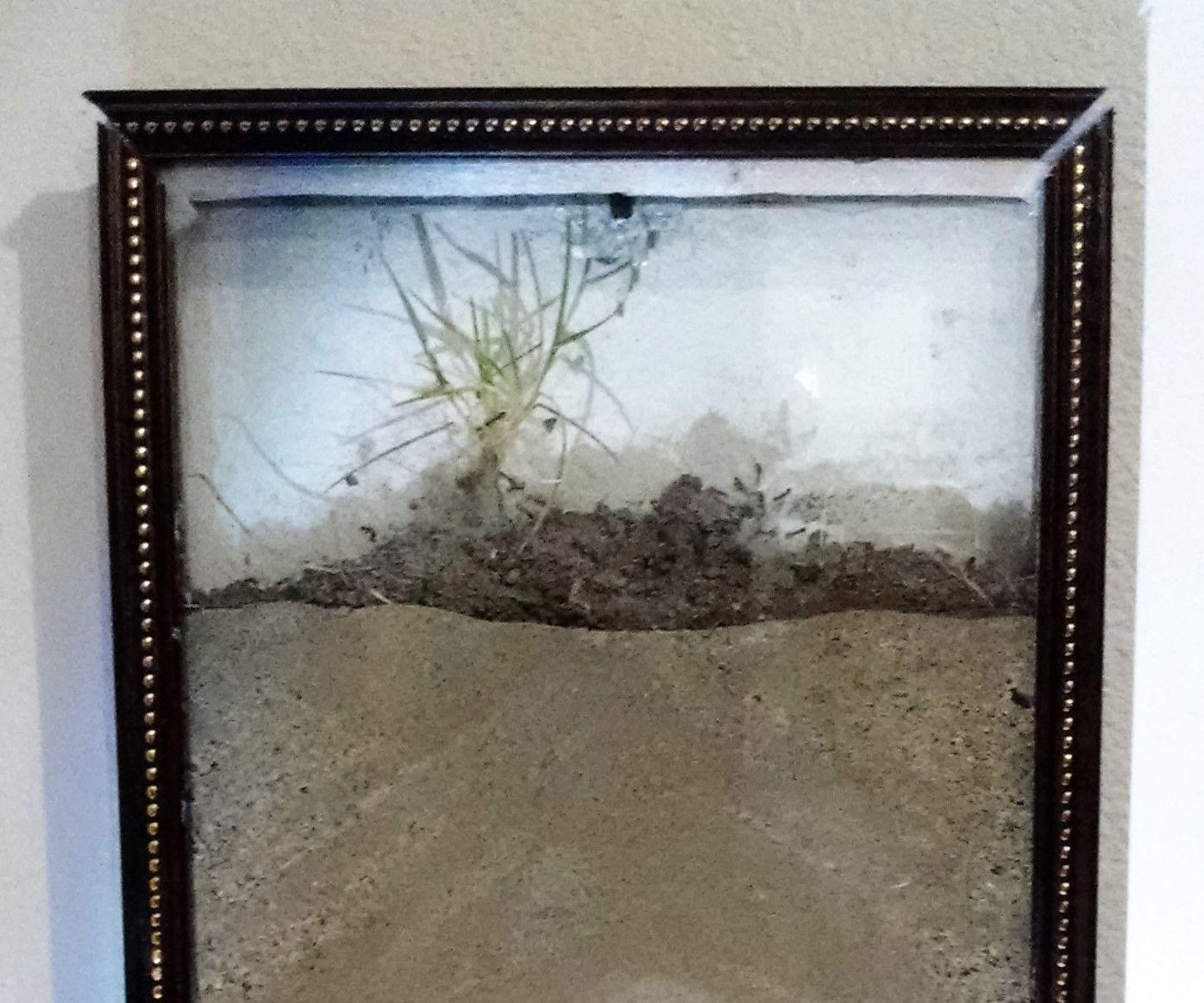 Artwork Ant Farm