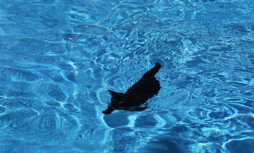 How to teach a cat to swim.
