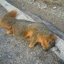 Roadkill Huntin'