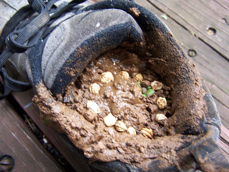Dirt & Seeds