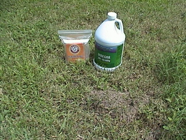 How to Kill Fire Ants and Commit Genocide