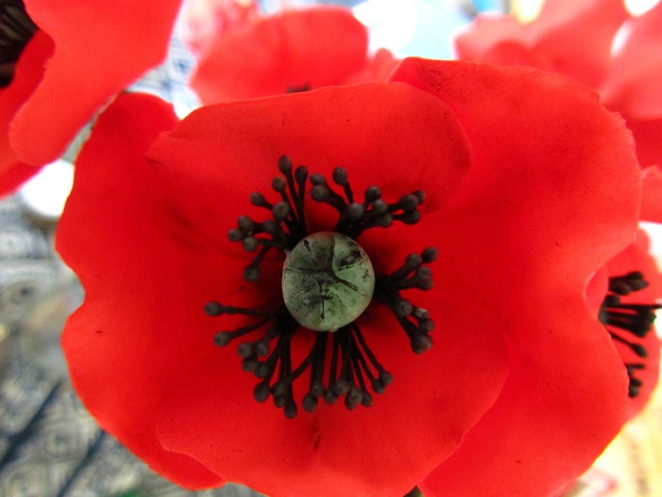Making Poppies: Adding Colour