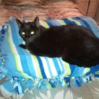 No Sew Pet Bed