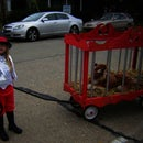 Circus Tiger Ringmaster