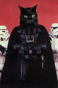 Reflections With Cat Vader