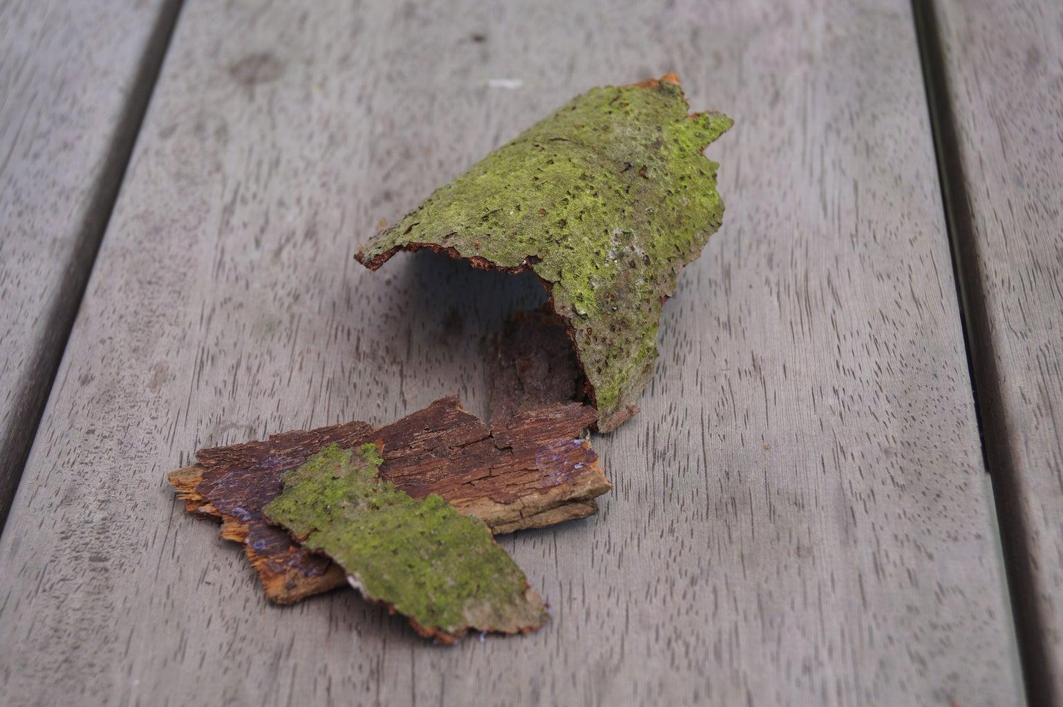 Verzamelen Van Natuurelementen Die Je in Epoxy Wil Gieten