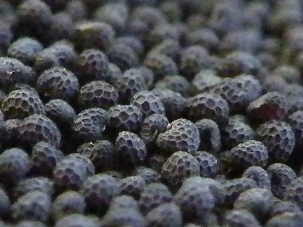 Gardening Science: Investigating Germination