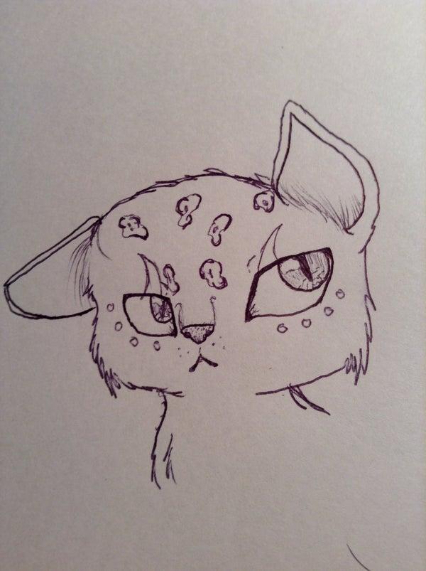 How to Draw a Semi Realistic Cat Head