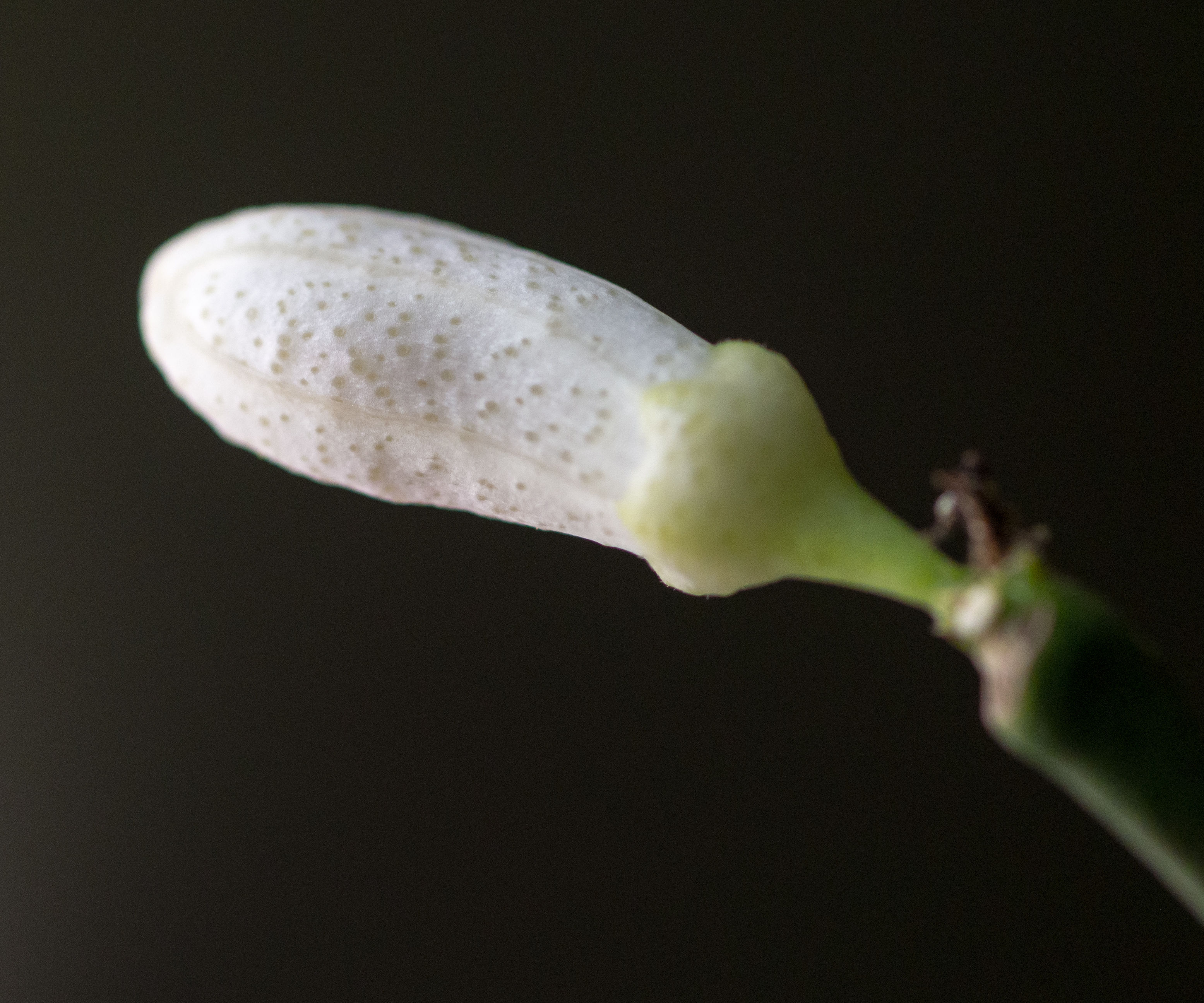 Flower and Macro Photography