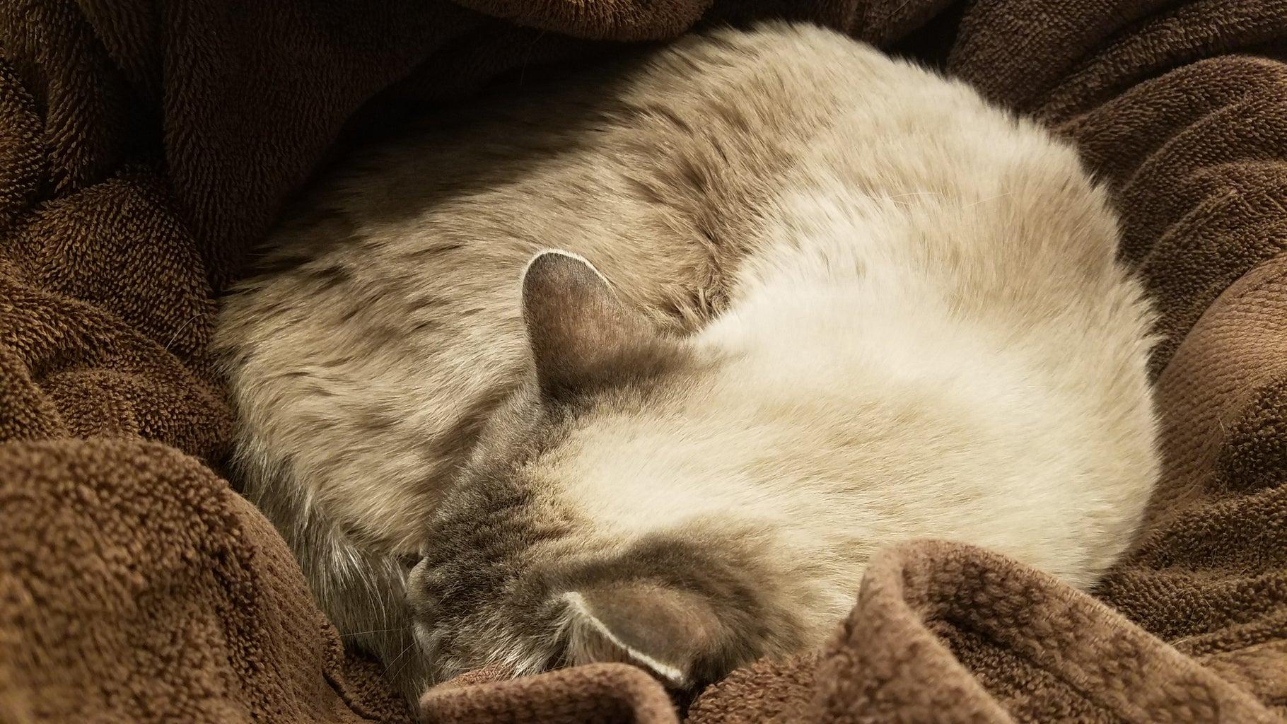Wake Up the Cat