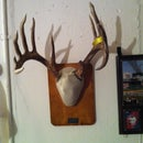 Homemade Deer Antlers Mount