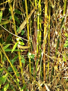 Easy Bamboo Monopod