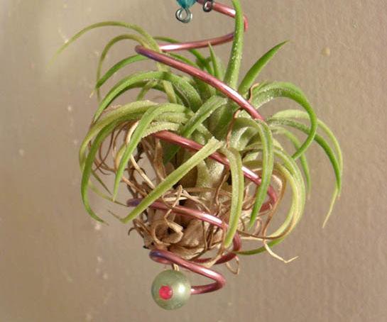 Easy, Elegant Air Plant Ornament