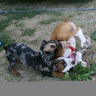 F:\puppies.jpg