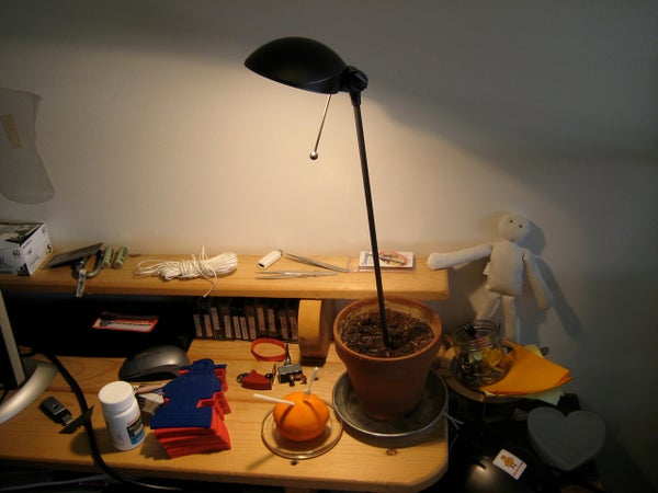 Potted Desk Lamp