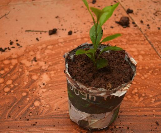 Bio Degradable Plant Pot