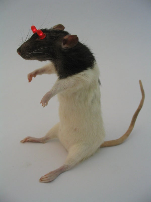 LED Throwie Rat (or Mouse)