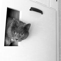 Self-Venting Cat Box
