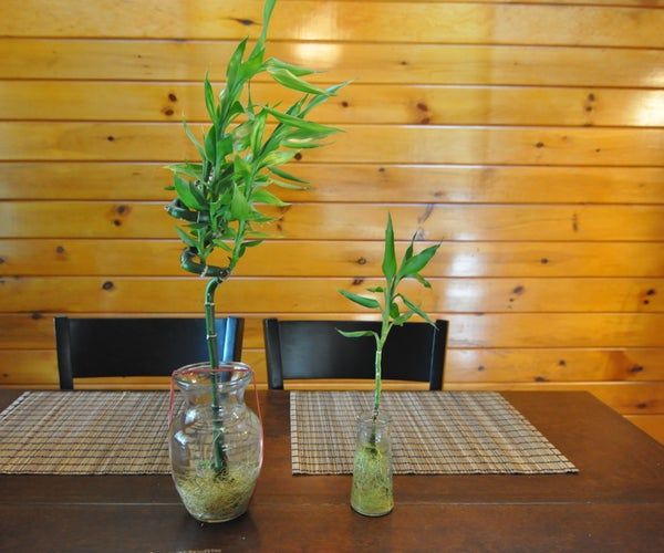 Cloning Your Bamboo