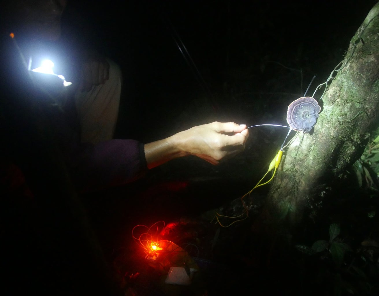 Fiber Optic Point Sensors and Display: Background