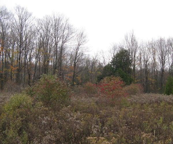 Three Essential Groups of Wild Edible Plants