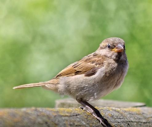 A Guide to Feeding Birds: Do's and Dont's