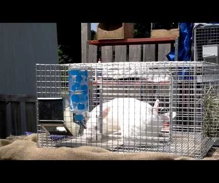 How to Breed a Rabbit