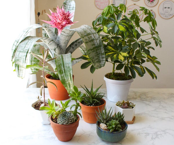 How to Choose the Right Pot or Planter for a Plant