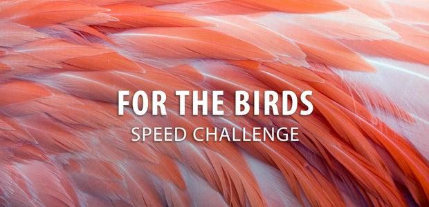 对于鸟类挑战