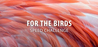 For the Birds Speed Challenge