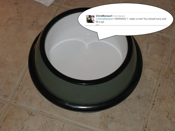 Tweeting Pet Bowl