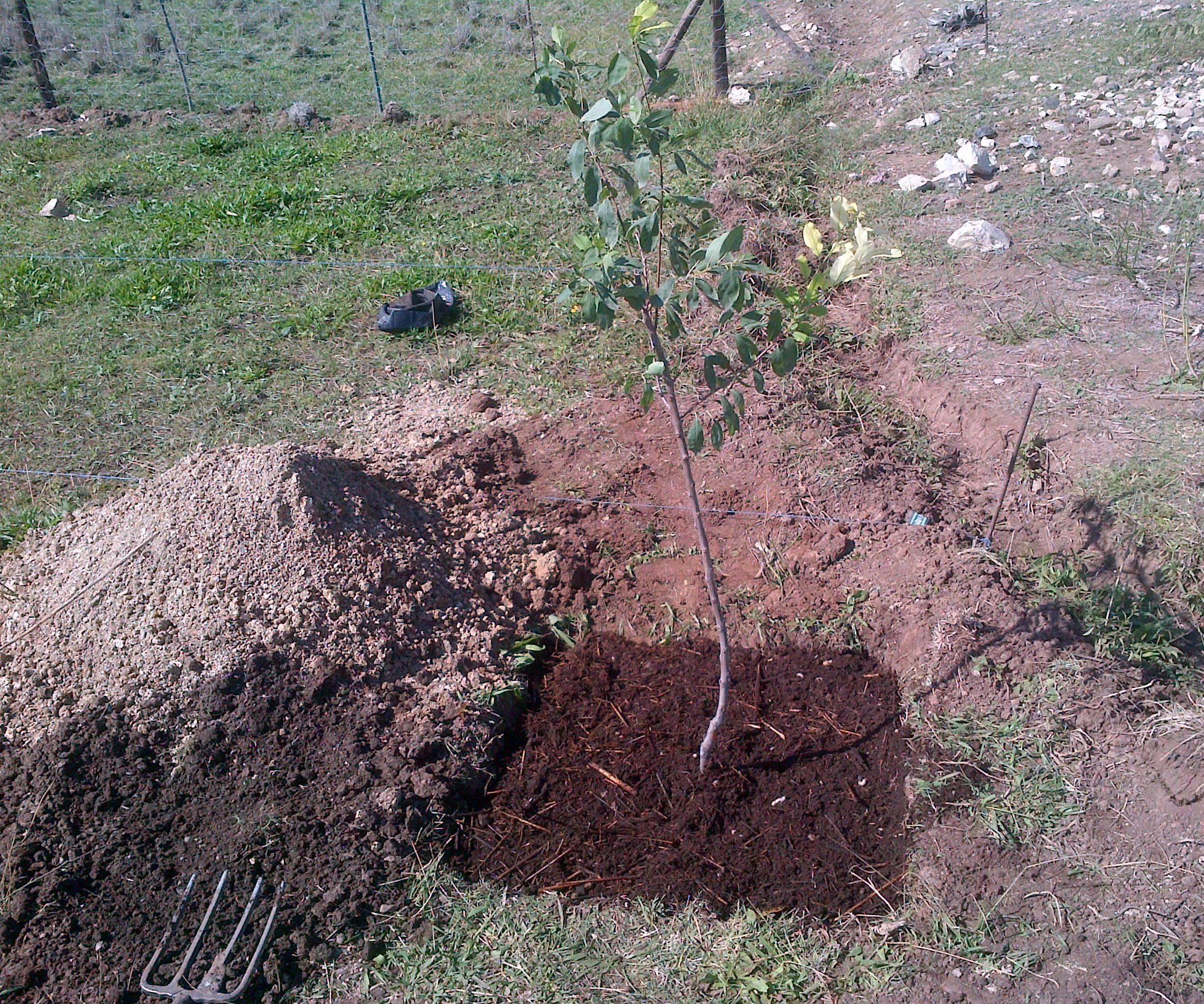 Planting tree Ellen White way (EGW)