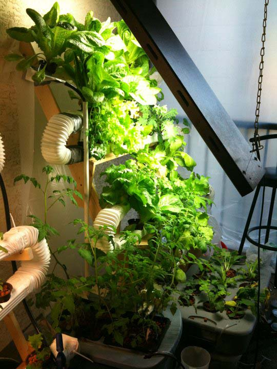 Ultimate Vertical Hydroponic Farm on the Cheap.. Gift away green crops!
