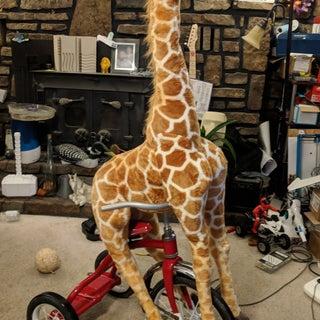 giraffe 1st day.jpg