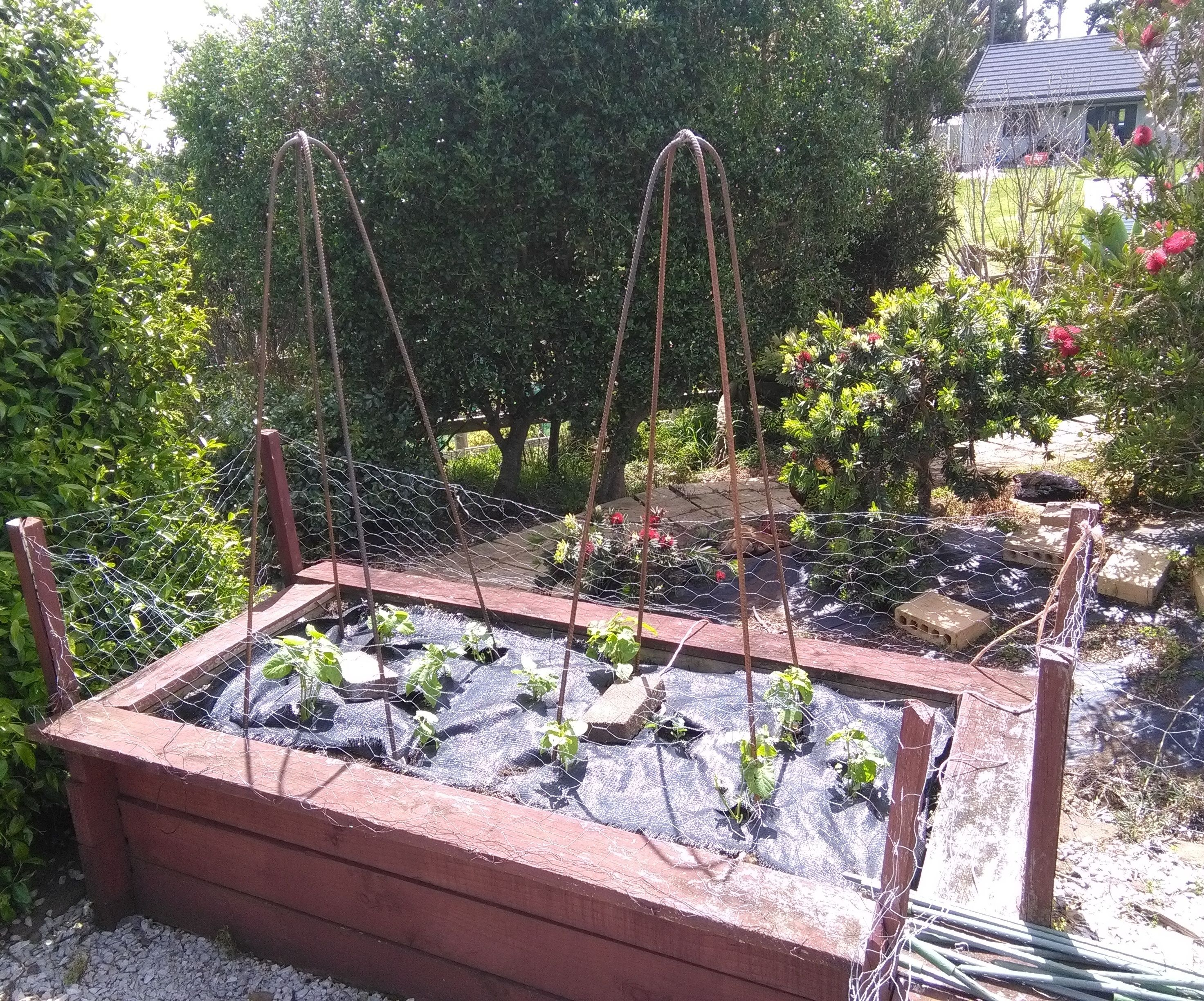 Vegetable Support or Trellis (or Obelisk!) What Would I Know!