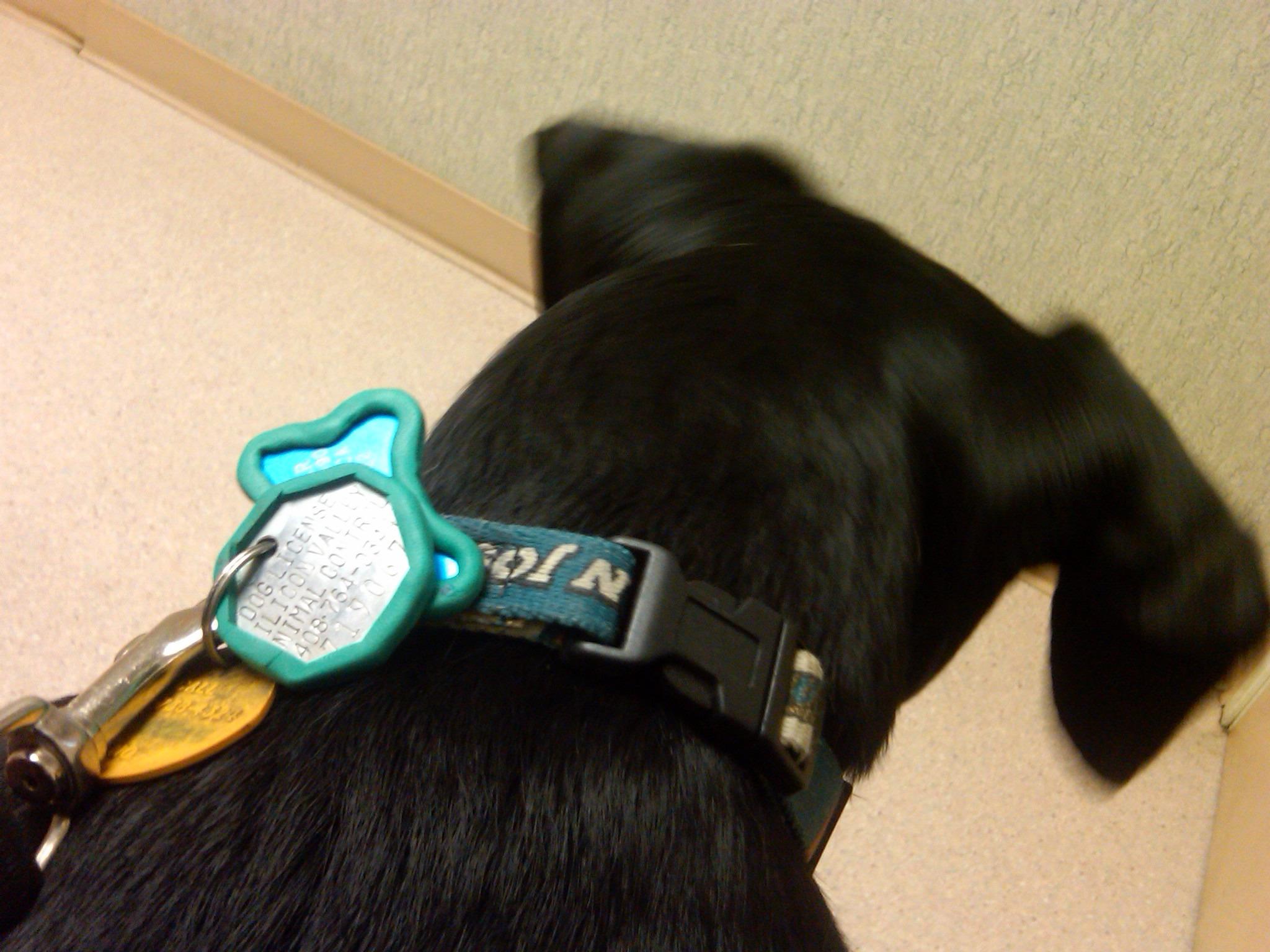 Silencing noisy dog tags