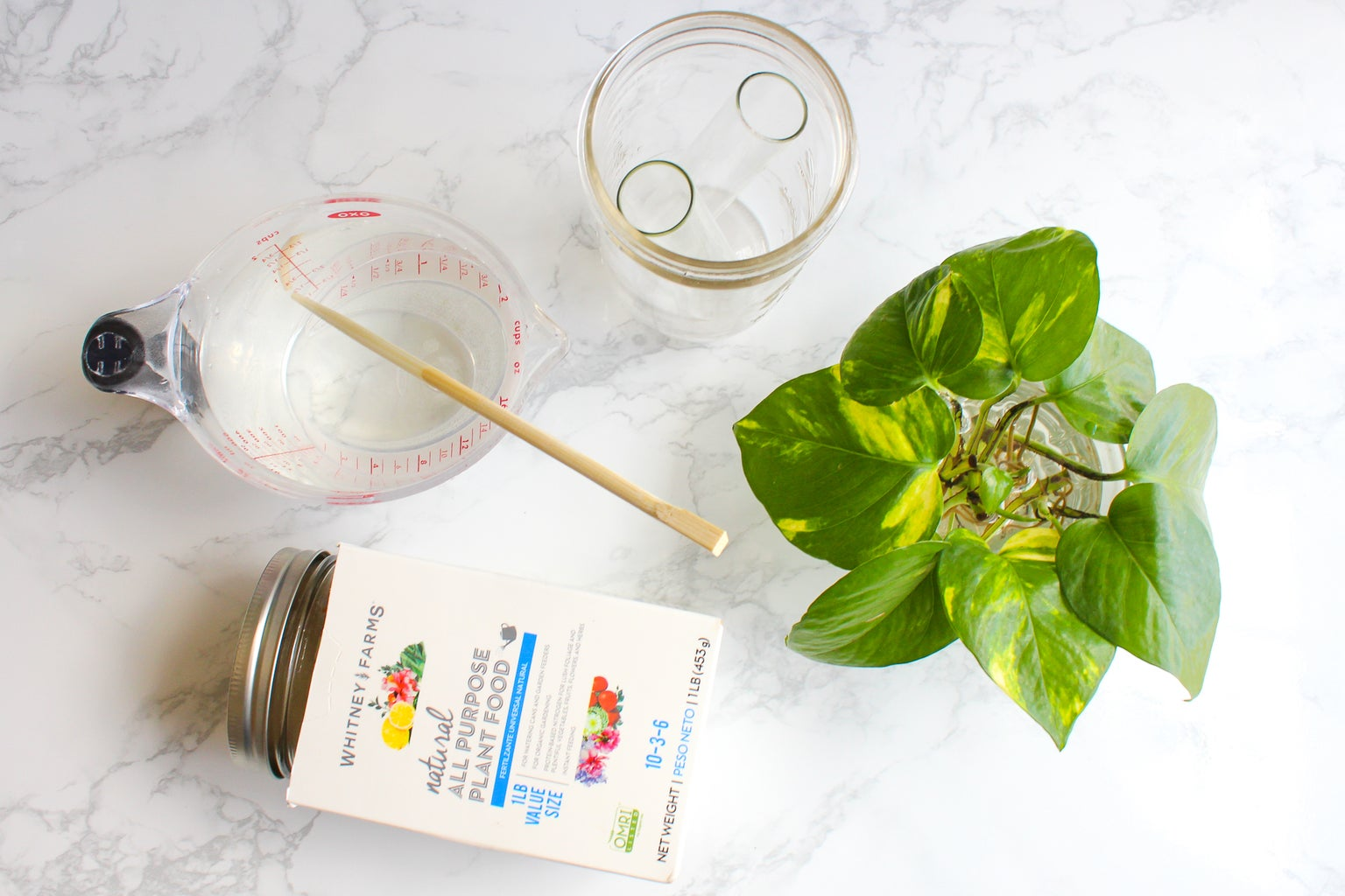 What You'll Need to Grow a Pothos in Water