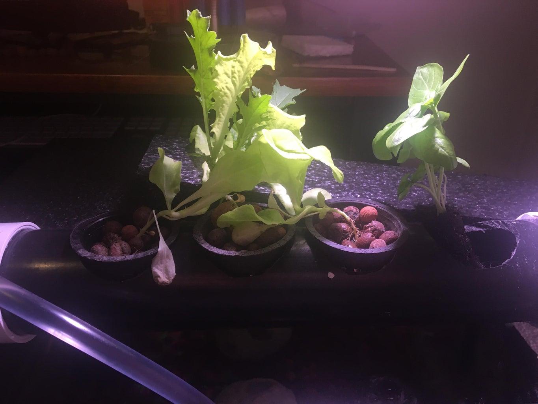 Step 4: Place Plants Inside Holes